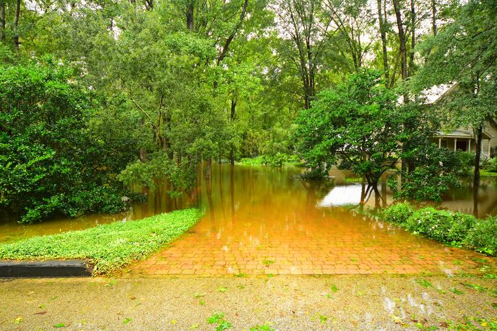 Flooding & Erosion of Gainesville Trees
