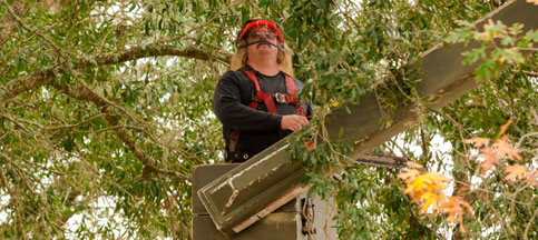 Mature Tree Care In Gainesville, FL