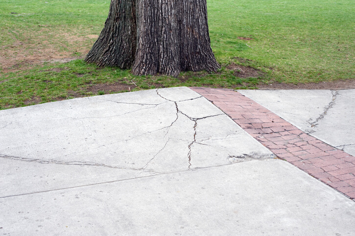 Root Pruning in Gainesville