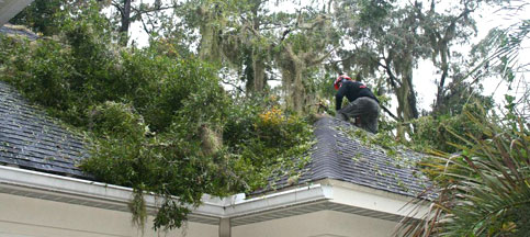 Removal of Storm-Damaged and Fallen Trees in Gainesville, FL