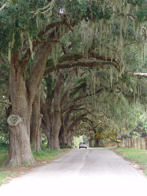 Tree Removal Services In Gainesville Fl