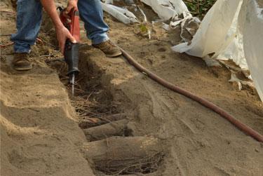 In-Progress Root Excavation