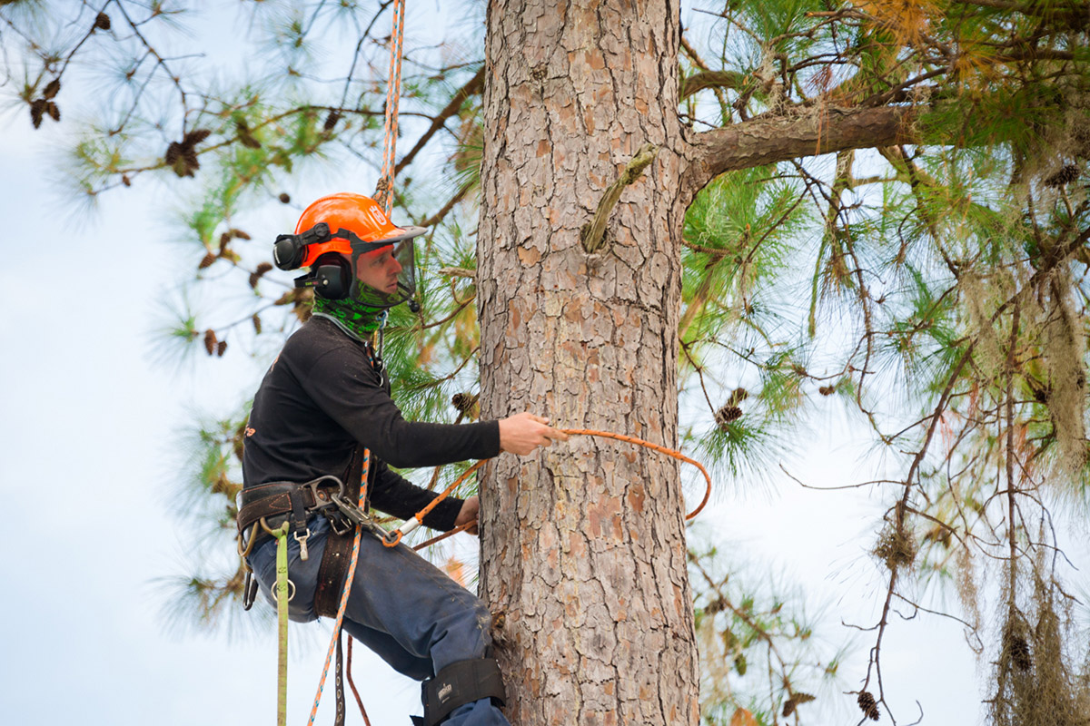 commercial-pruning-in-gainesville.jpg