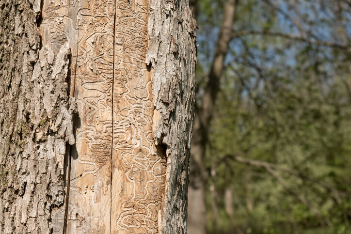 Image for blog post: Common Florida Tree Pests & Signs Of Pest Damage