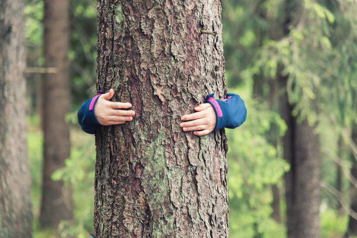common-tree-health-issues.jpg