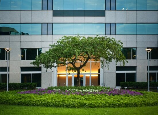 Image for blog post: Best Trees To Plant On Your Commercial Property